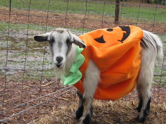 Corn Maze Pumpkin Patch Knoxville Tn