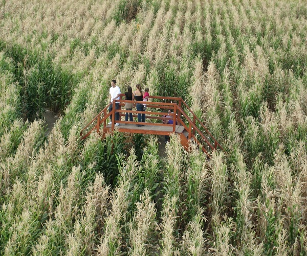 Corn maze and pumpkin patch in woodstock illinois all - The wedding garden carbondale il ...