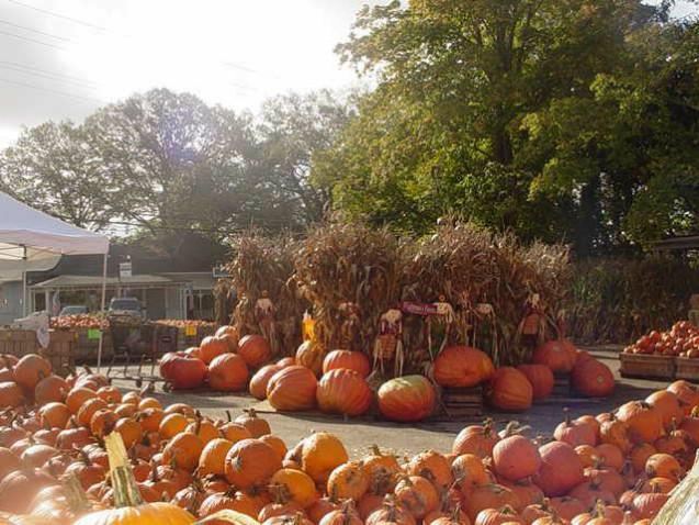 pumpkin junction scranton nd