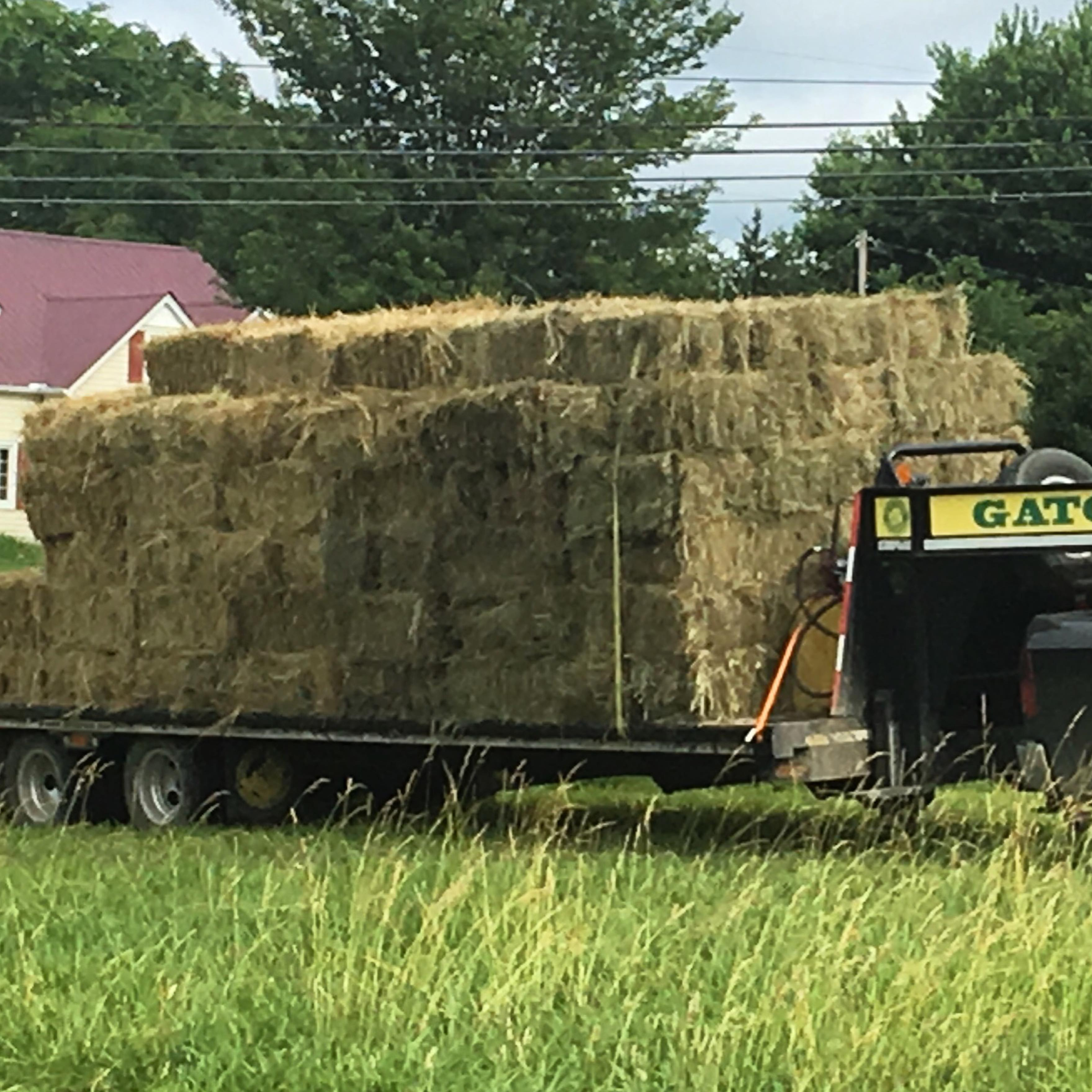 hay for sale in tennessee hay map. Black Bedroom Furniture Sets. Home Design Ideas