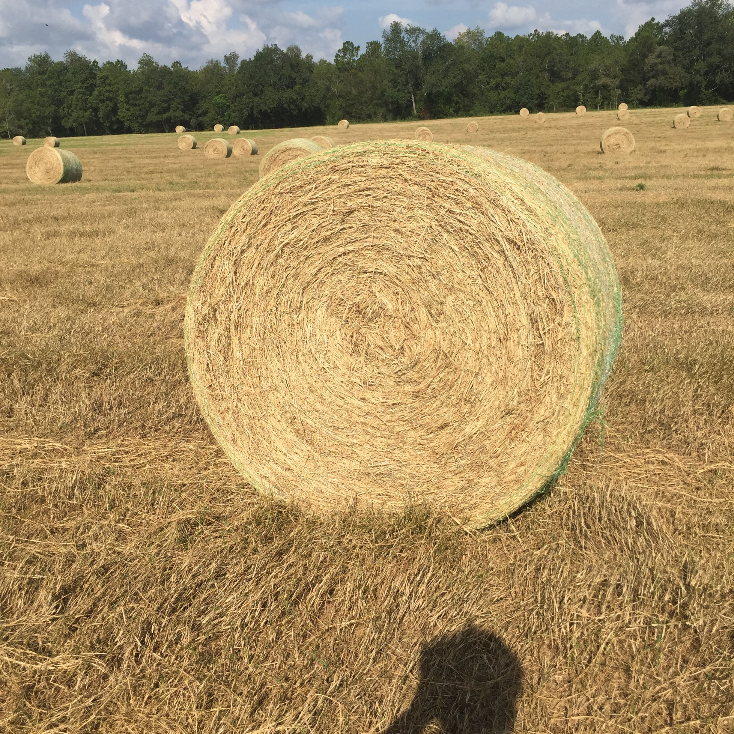Hay For Sale In Florida Hay Map - Florida map for sale
