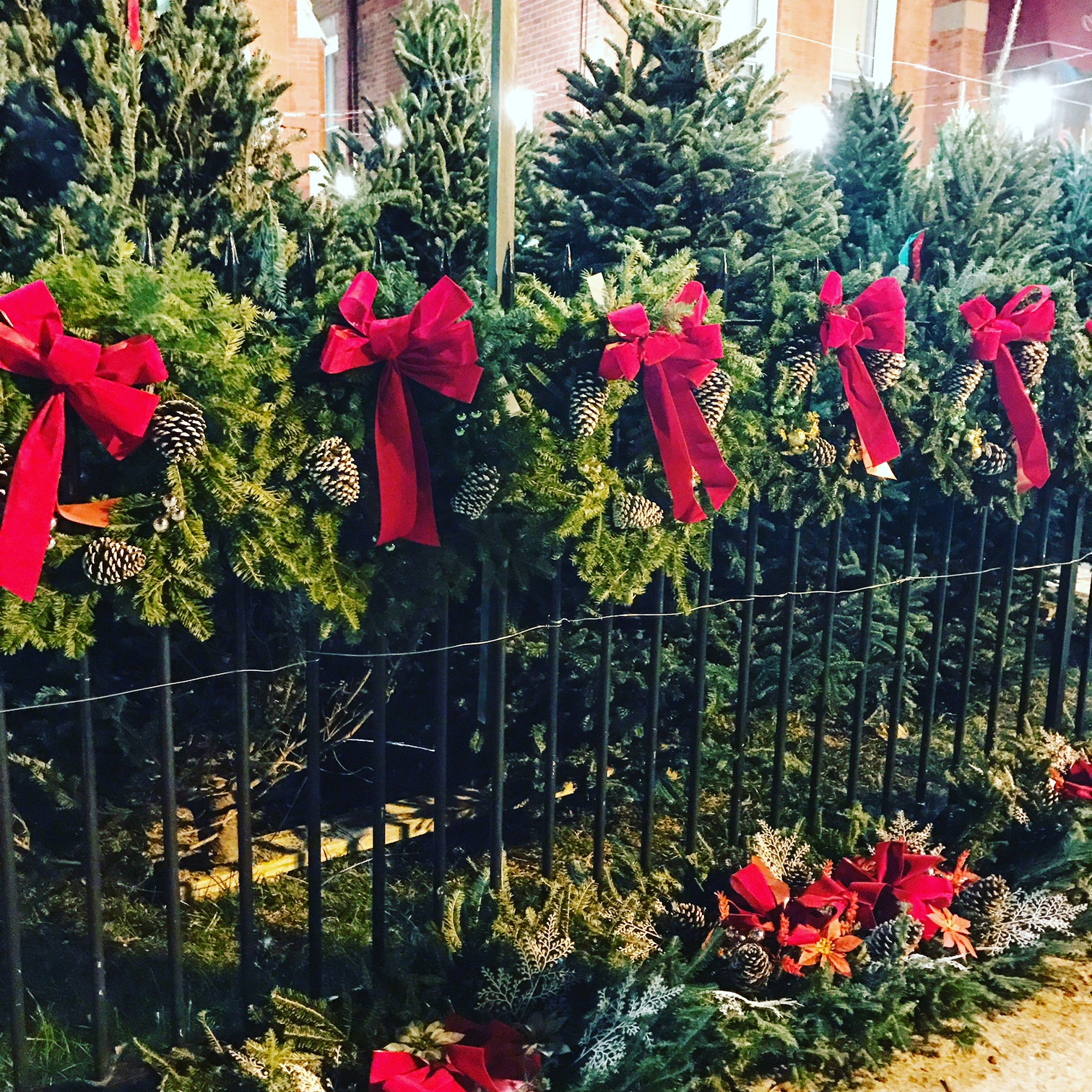 where to buy christmas trees hoboken - Buy Christmas Tree