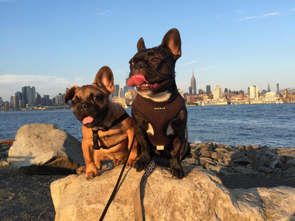 chip-and-pierre hoboken girl trusty tails