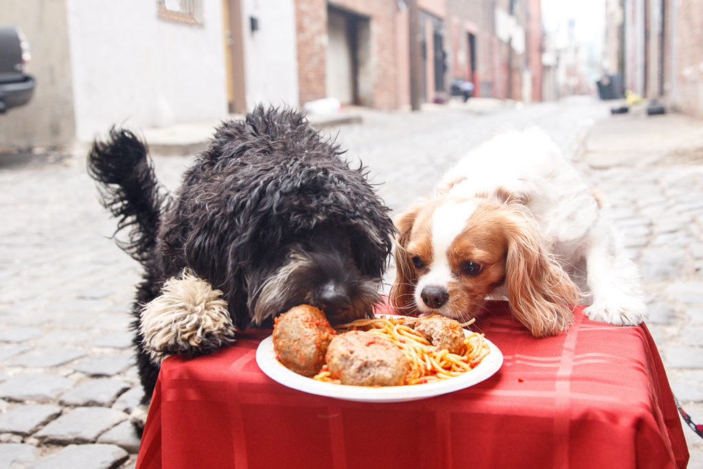 lady-and-the-tramp-hoboken