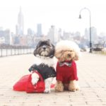 Hoboken Dog Couples Who Are #ValentinesDayGoals