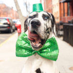 10 Hoboken Dogs Who Are Ready for St. Patrick's Day