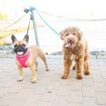 20 Hoboken Dogs You Need to Follow On Instagram