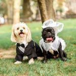Hoboken Dog Brides and Grooms Who Slayed Their Wedding Day