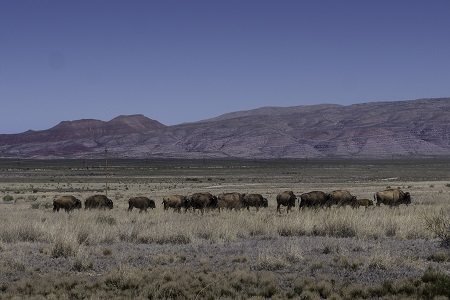 Travel, New Mexico, Colorado, Western, Horses, Photography
