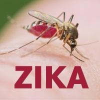 hospital medicine, emergency medicine, infectious disease, Zika virus