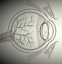 MS Patients Much More Likely to Have Uveitis, According to Review
