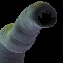 """Hookworm Soup"" a Potent Asthma Solution?"