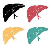 hepatitis, hepatitis c, hcv, hcv treatment, traditional medicine, internal medicine, liver function, hiv, human immunodeficiency virus, thc, marijuana, fibrosis, cirrhosis, liver damage, that weed