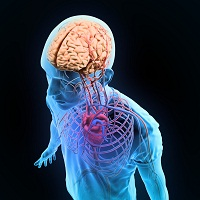 Strokes are a Risk Factor for Vascular Cognitive Disorder
