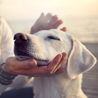 Must-Know Tips for Flying with Pets