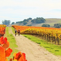 Plan Ahead Part 3: From Californian to French Fall Adventures