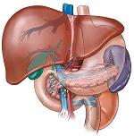 Early Detection and Treatment is the Key to Increasing Survival in Patients with Liver Cancer