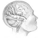 Does Parkinson's Disease Originate in the Gut?