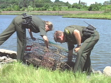 Fish and game wardens for Wildlife fish and game