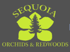 Sequoia Orchids and Redwoods