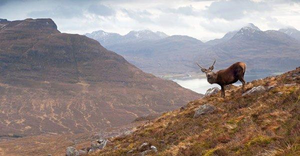 Scotland, Scottish highlands, beautiful scenery, deer, elk, scot, union, separatist, united kingdom, independence, scot countryside, stunning, gorgeous - HeadStuff.org