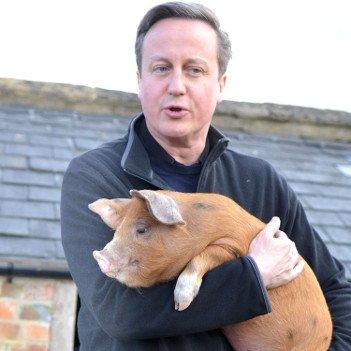 David Cameron - HeadStuff.org