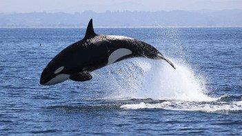 A whale - HeadStuff.org