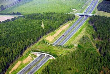 wildlife pass over highway