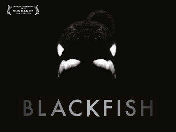 Blackfish - HeadStuff.org
