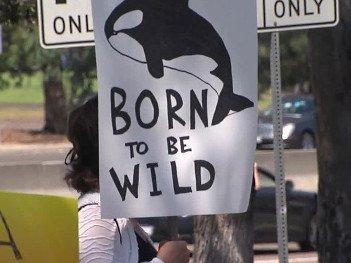 SeaWorld protest - HeadStuff.org