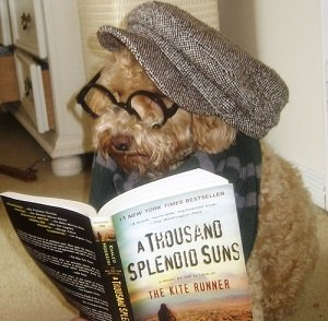 Dog dressed as a hipster - headstuff.org