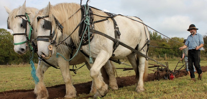 horses ploughing Cloughjordan