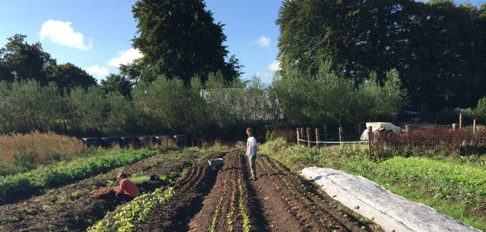 cloughjordan gardening