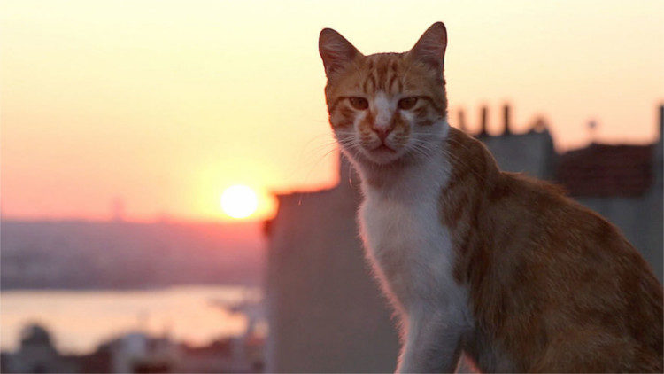 The Best Movies You Missed in 2017 Kedi