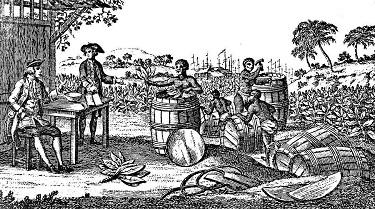 Slaves working on a tobacco plantation - headstuff.org