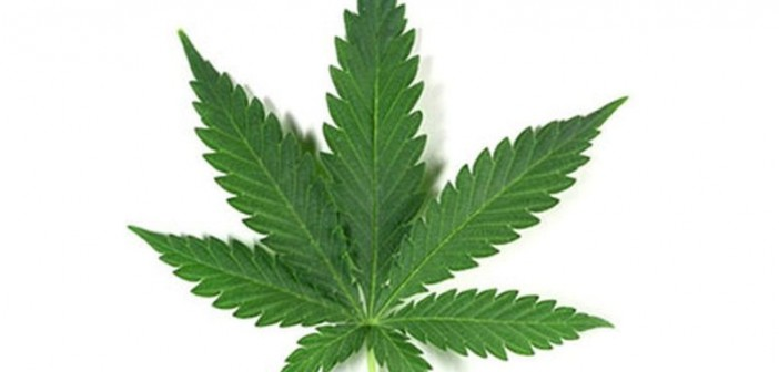 Where It's Legal, One-Quarter of Cancer Patients Use Medical Pot
