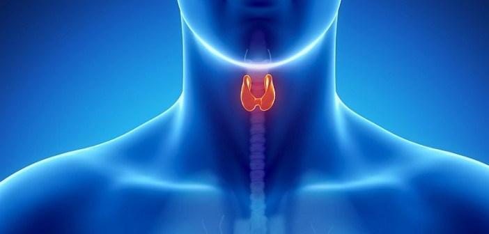 Thyroid Cancer Survivors at Risk for Heart Disease