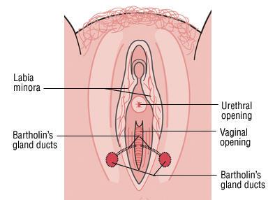 labia minora itch