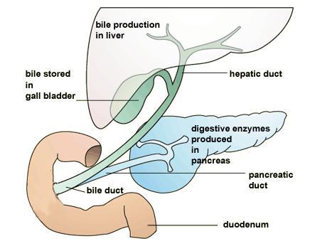 cirrhosis of the liver cirro h