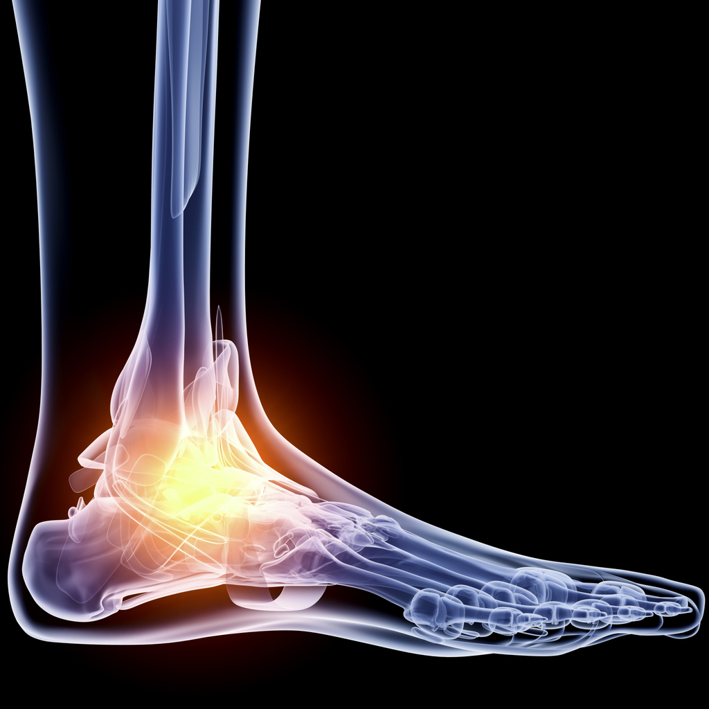 ankle pain - doctor answers on healthtap, Skeleton