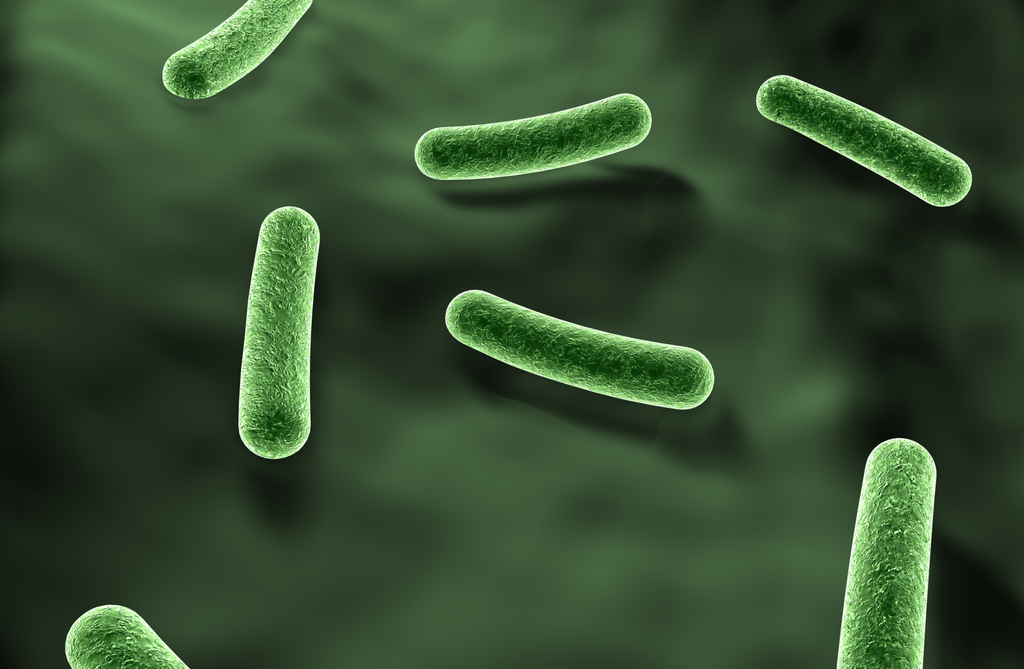 Bacterial Dysentery Answers On Healthtap