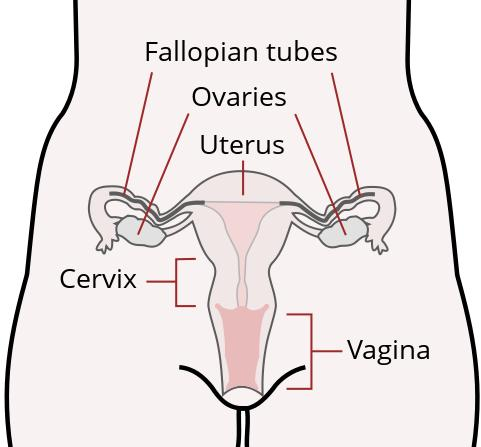 If you have a normally competent cervix it should not be affected at all by cramps from diarrhea.