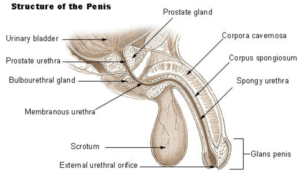 Burning pain in urethra after urination