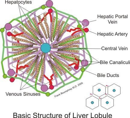Liver Disease Skin