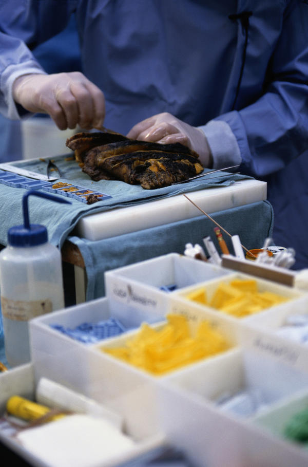 How Much Does a Pathologist Make