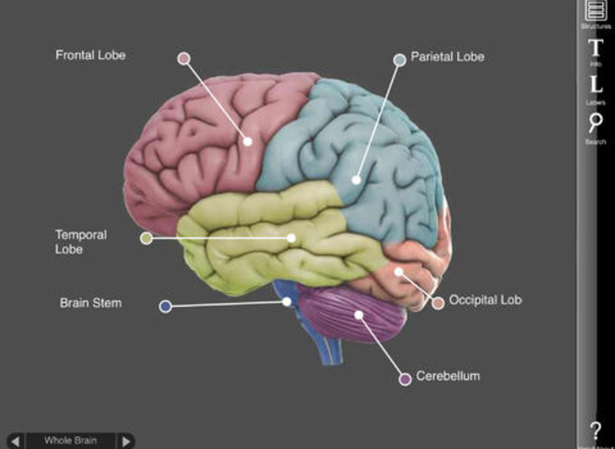 3D Brain - Application -