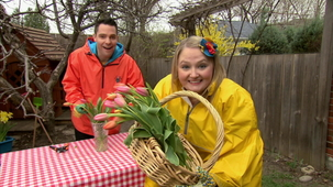 Vidéo - C'est le printemps : Les tulipes