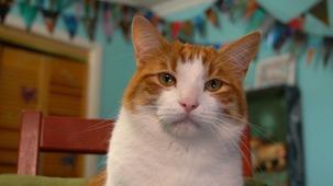 Vidéo - Nous les chats - 1