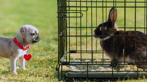 Vidéo - Bennie le lapin
