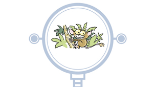 Vidéo - Le tarsier